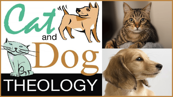 Cat n Dog Theology