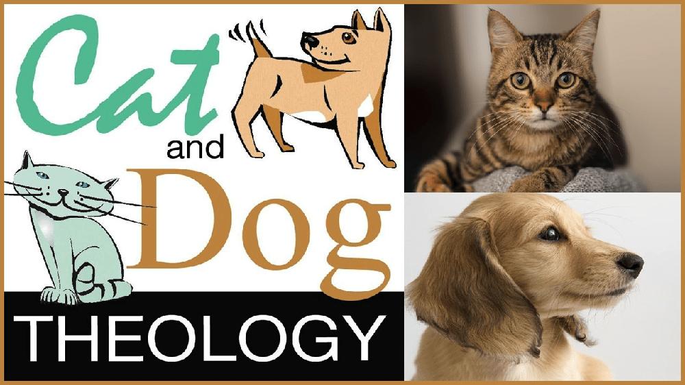Cat n Dog Theology